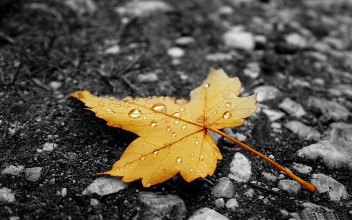 raindrops on fallen leaf-Autumn landscape widescreen wallpaper Views:23797 Date:10/16/2012 11:58:10 AM