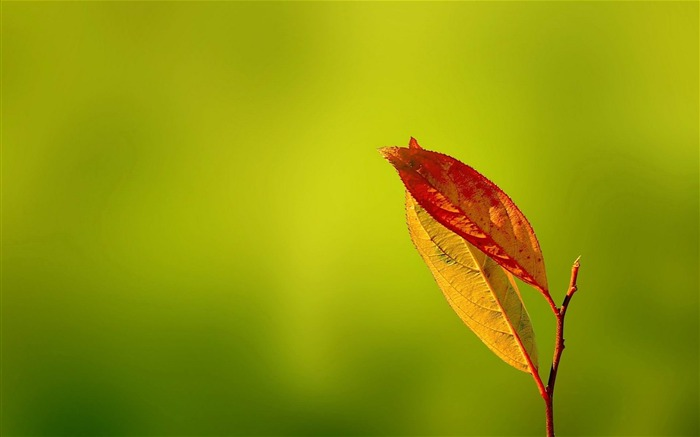 red Leaves-plants photography Wallpaper Views:3791