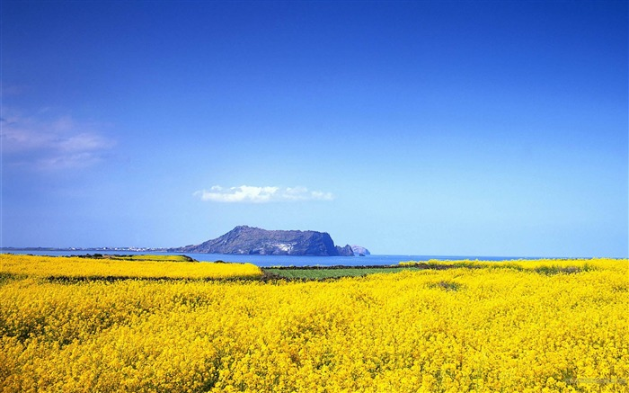 Beautiful Flower Ocean-2012 landscape Selected Wallpaper Views:9703