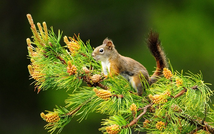 Forest Elf-cute squirrel HD Wallpapers picture 01 Views:7767 Date:11/12/2012 12:24:14 AM