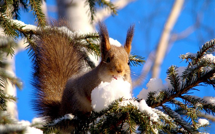 Forest Elf-cute squirrel HD Wallpapers picture 08 Views:5232 Date:11/12/2012 12:27:18 AM