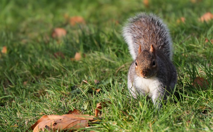 Forest Elf-cute squirrel HD Wallpapers picture 09 Views:5696 Date:11/12/2012 12:27:40 AM