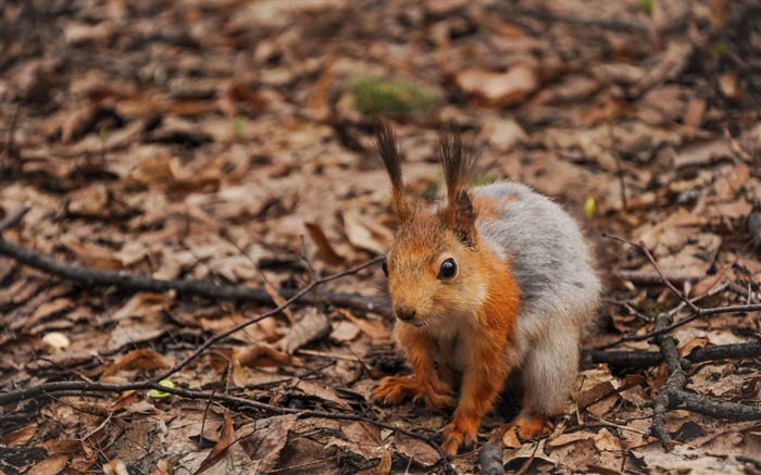 Forest Elf-cute squirrel HD Wallpapers picture 11 Views:4837 Date:11/12/2012 12:28:55 AM