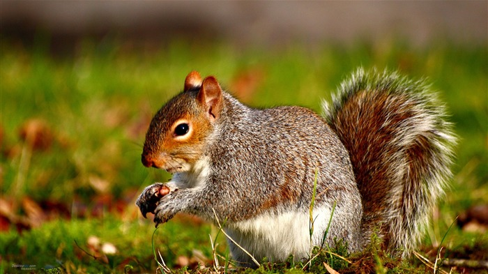 Forest Elf-cute squirrel HD Wallpapers picture 12 Views:6694 Date:11/12/2012 12:29:18 AM