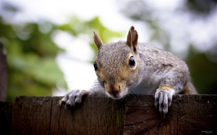 Forest Elf-cute squirrel HD Wallpapers picture 13 Views:4956 Date:11/12/2012 12:29:40 AM