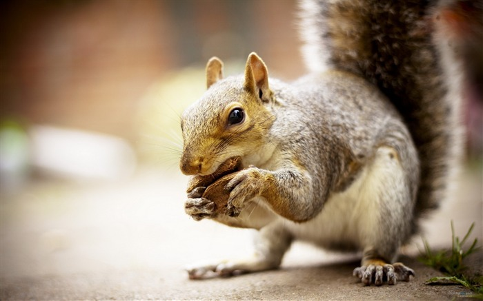 Forest Elf-cute squirrel HD Wallpapers picture 16 Views:3899 Date:11/12/2012 12:30:37 AM