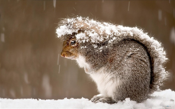 Forest Elf-cute squirrel HD Wallpapers picture 17 Views:7661 Date:11/12/2012 12:30:59 AM