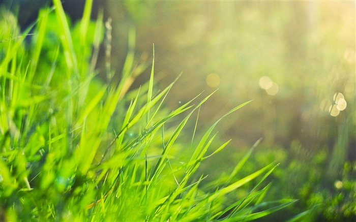 Natural Grass Wallpaper Grass Morning Natural