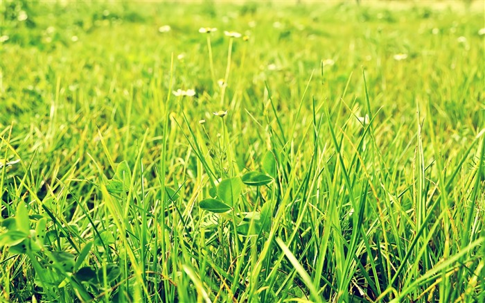 Green Pastures-Small fresh landscape wallpaper Views:11062