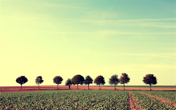 Lined up-Small fresh landscape wallpaper Views:4347
