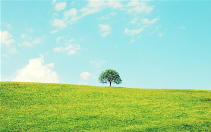 Lonely little tree-Small fresh landscape wallpaper Views:13692