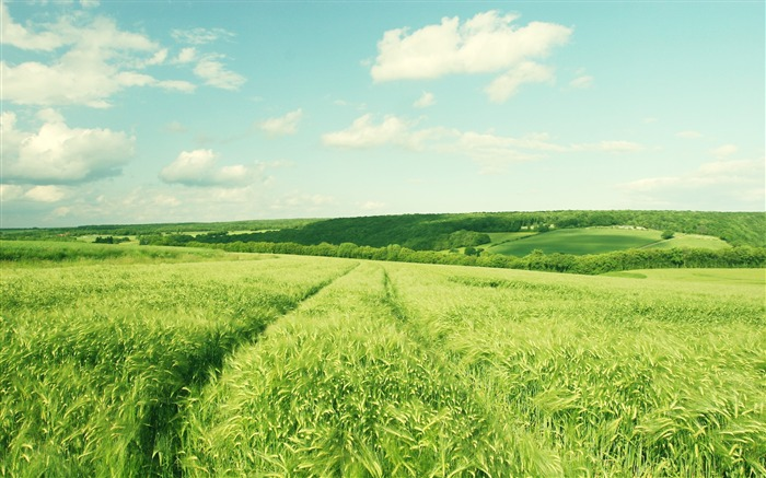 Wheat fields of Burgundy France-Small fresh landscape wallpaper Views:13269
