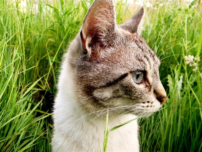 close up cat in the grass-2012 animal Featured Wallpaper Views:3709