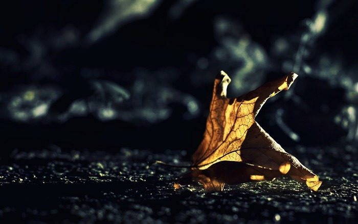 dried leaf bokeh-autumn of natural scenery Wallpaper Views:5634