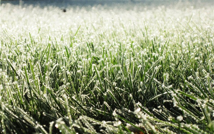 frost on grass-Winter snow scenes wallpaper Views:5175