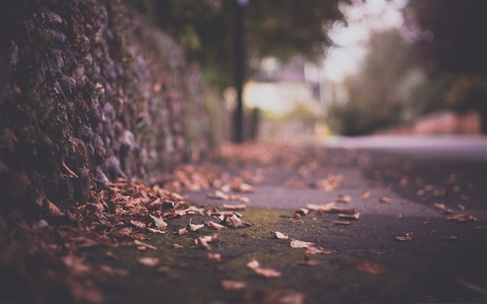 leaves on pavement-autumn of natural scenery Wallpaper Views:4707