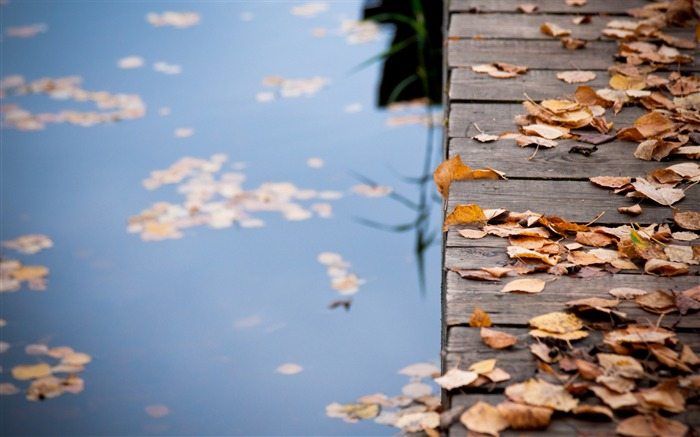leaves on wooden bridge-autumn of natural scenery Wallpaper Views:4964