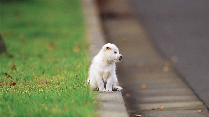 little puppy on the street-2012 animal Featured Wallpaper Views:3761
