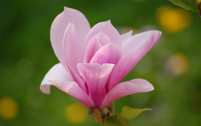 2012 Beautiful flowers photography featured Wallpapers Views:12634