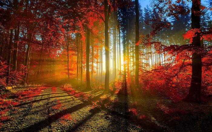 red forest-autumn of natural scenery Wallpaper Views:29560