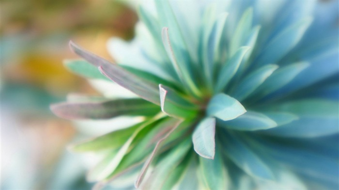 teal flower close up-Flowers and plants wallpaper Views:11775