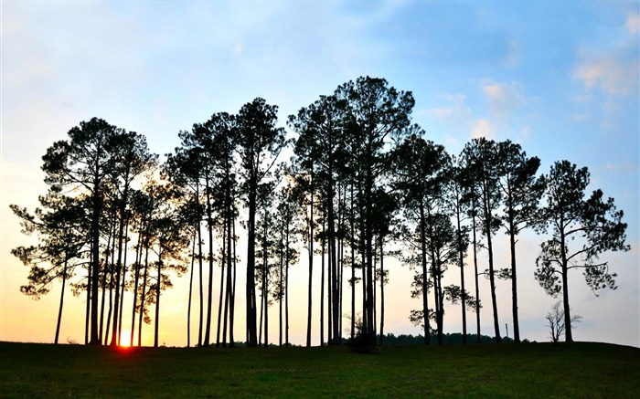 trees at sunrise-nature scenery wallpapers Views:2754