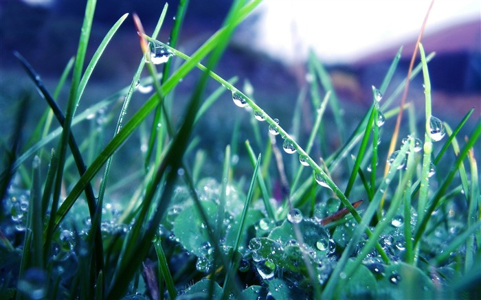 wet green grass-2012 Natural plant Featured wallpaper Views:2655