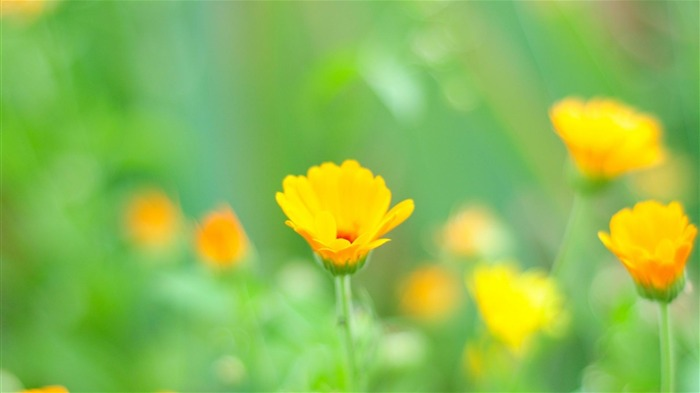 yellow flowers-Flowers and plants wallpaper Views:6321
