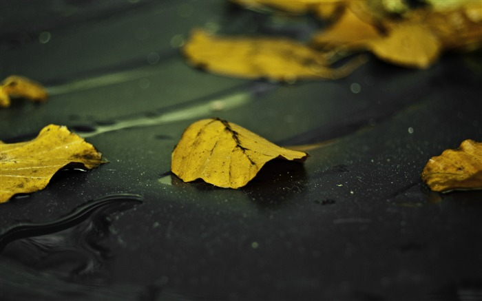 yellow leaves on wet asphalt-autumn of natural scenery Wallpaper Views:2652