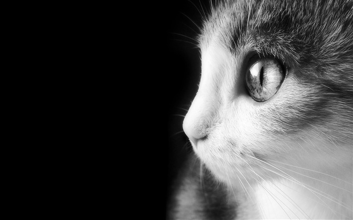 Cute Cat Eye-Animal Wizard photography wallpaper Views:14546