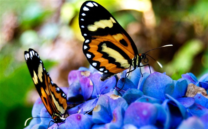 Flower Butterfly-Animal Wizard photography wallpaper Views:4576