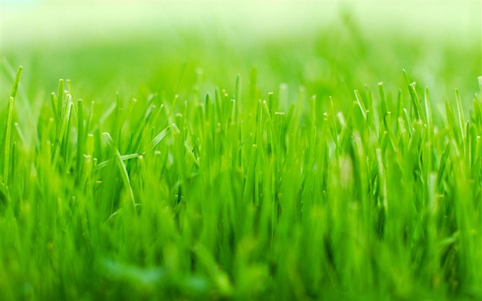 Green grass macro-Ubuntu 10-04 LTS official beautiful Desktop Wallpapers Views:6801