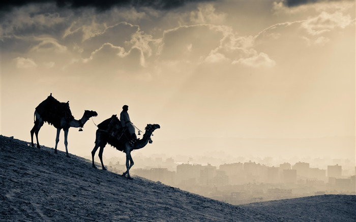 Jordan camel desert-Natural landscape Photography Wallpaper Views:5912