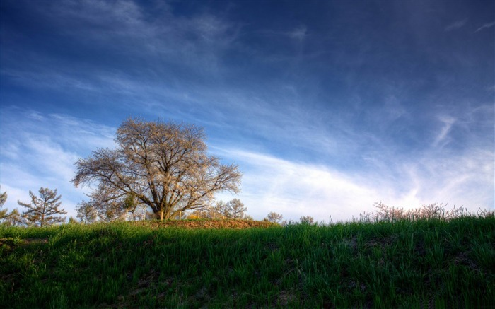 cherry tree hdr-Natural beauty widescreen wallpaper Views:5431