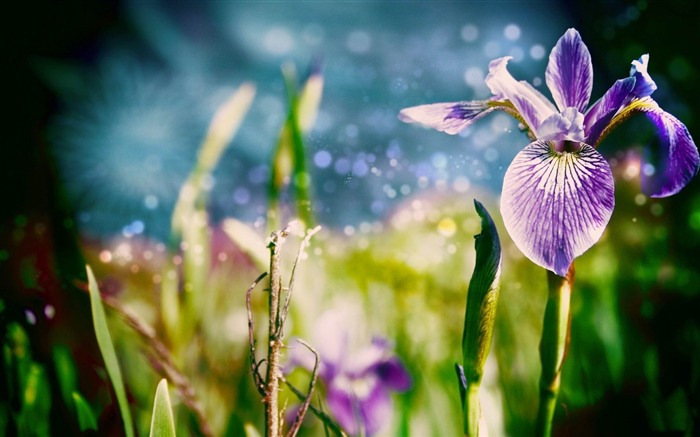 gladdon-Fresh flowers photography wallpaper Views:3262