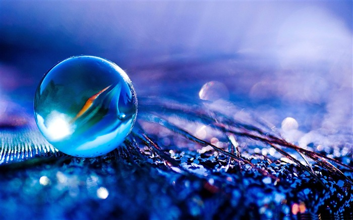 2012 Macro photography theme selected wallpapers Views:16517