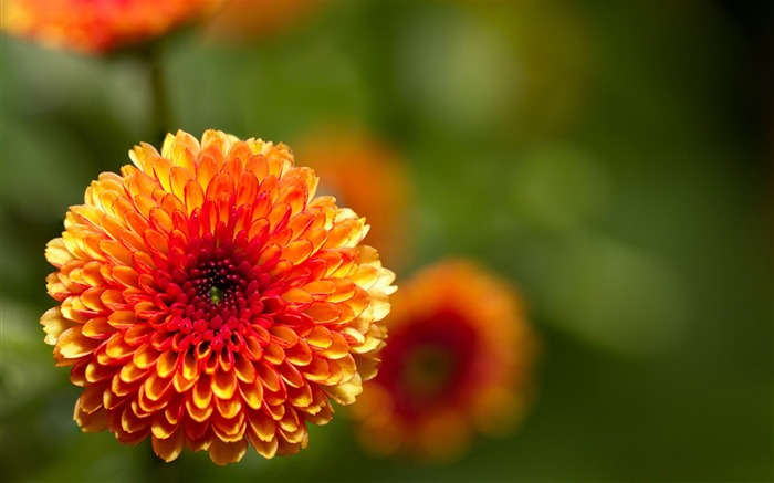 2012 Flowers beautiful Photography wallpaper Views:9759