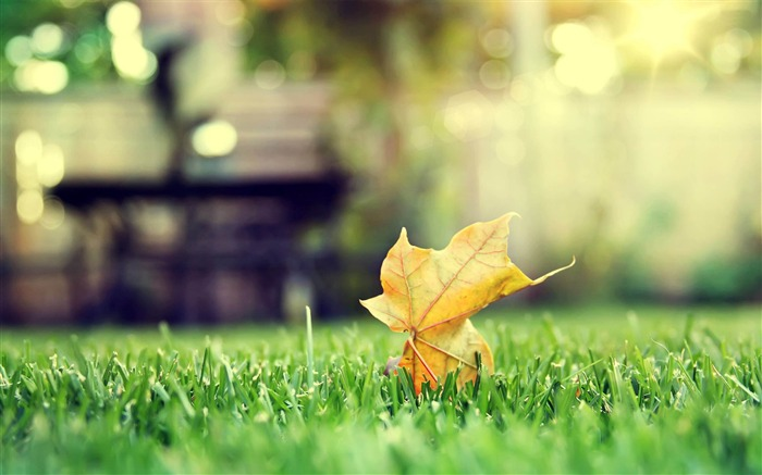 leaf on grass-Landscape with beat wallpaper Views:5767 Date:12/2/2012 10:57:17 AM
