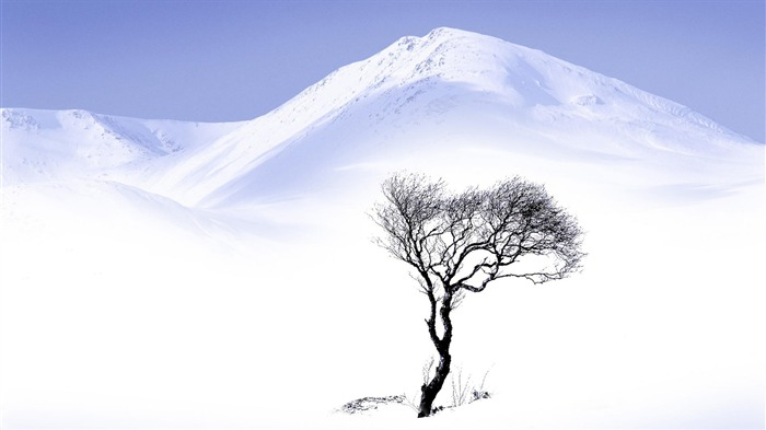 single tree and white snow-beautiful winter landscape wallpaper Views:4498