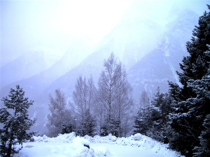 snow and trees-beautiful winter landscape wallpaper Views:4874