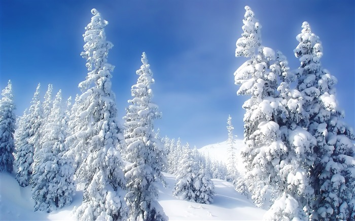 snow on trees-beautiful winter landscape wallpaper Views:20427