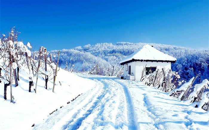 snowy up close-beautiful winter landscape wallpaper Views:7123
