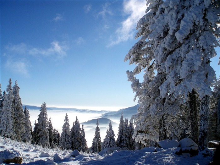 trees and snow-beautiful winter landscape wallpaper Views:7999