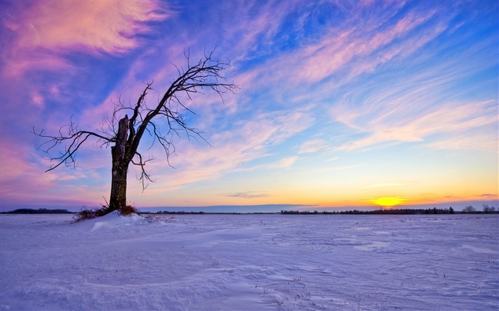 Lonely Old Tree Sunset-beautiful natural landscape Wallpaper Views:33534 Date:1/20/2013 9:50:51 PM
