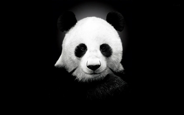Title:Panda-Cute animals wallpaper Views:4936