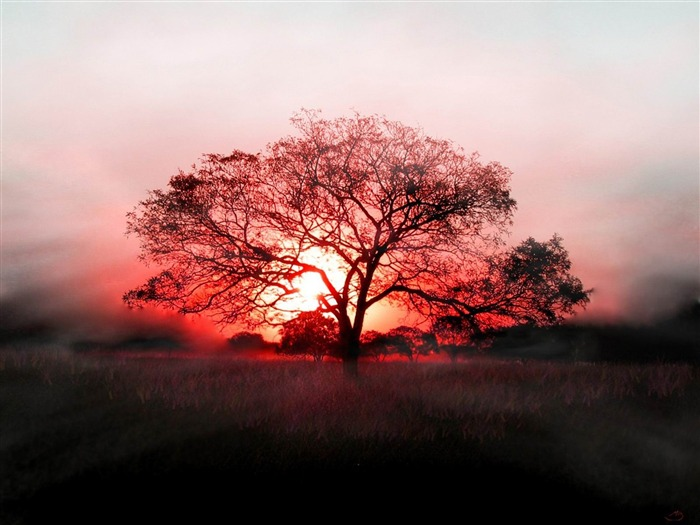 Sunset and a Tree-beautiful natural landscape Wallpaper Views:11044 Date:1/20/2013 9:53:05 PM