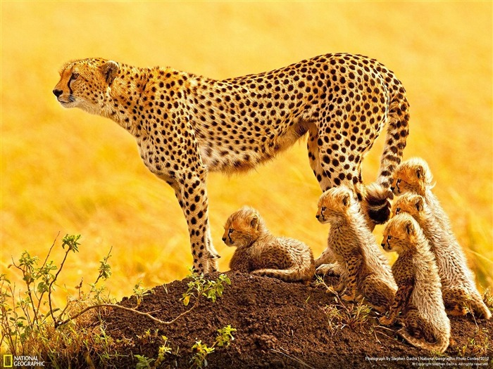 The Matriarch-2012 National Geographic Photography Wallpaper Views:3721