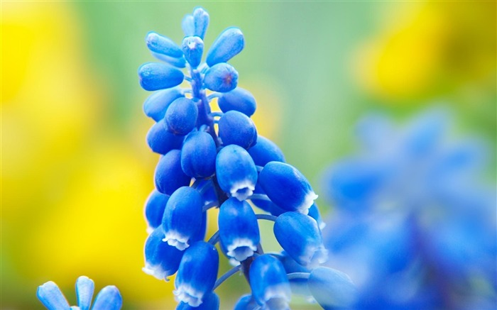 Breath of spring-beautiful flowers photography wallpaper Views:25398