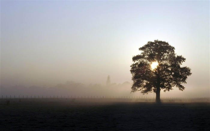 foggy field-amazing natural scenery wallpaper Views:4365 Date:1/5/2013 10:47:23 PM