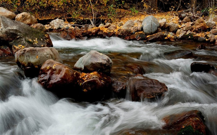 foliage in the river-amazing natural scenery wallpaper Views:4491 Date:1/5/2013 10:38:20 PM